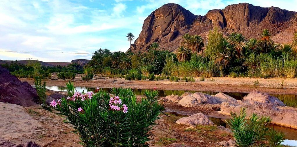 fleurs et joli paysage avec des palmiers et la montagne au fond