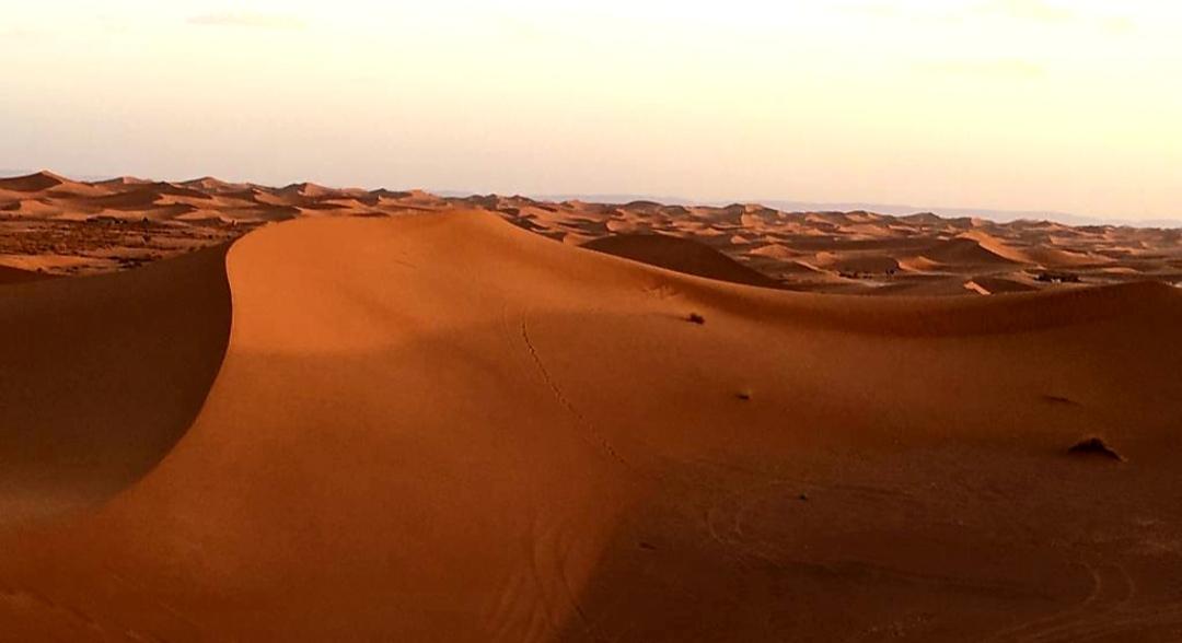 Dunes dans le désert