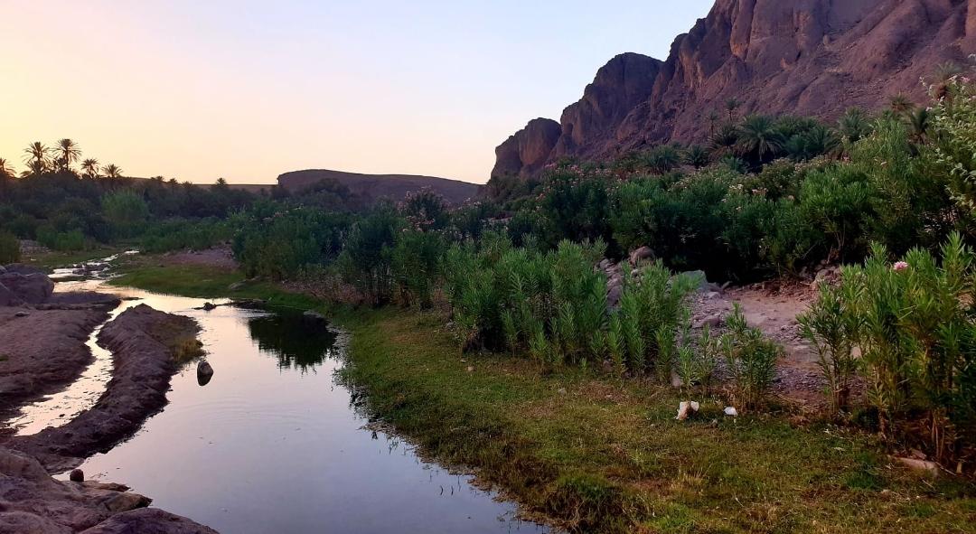photo au bord de l'Oued dans une Oasis