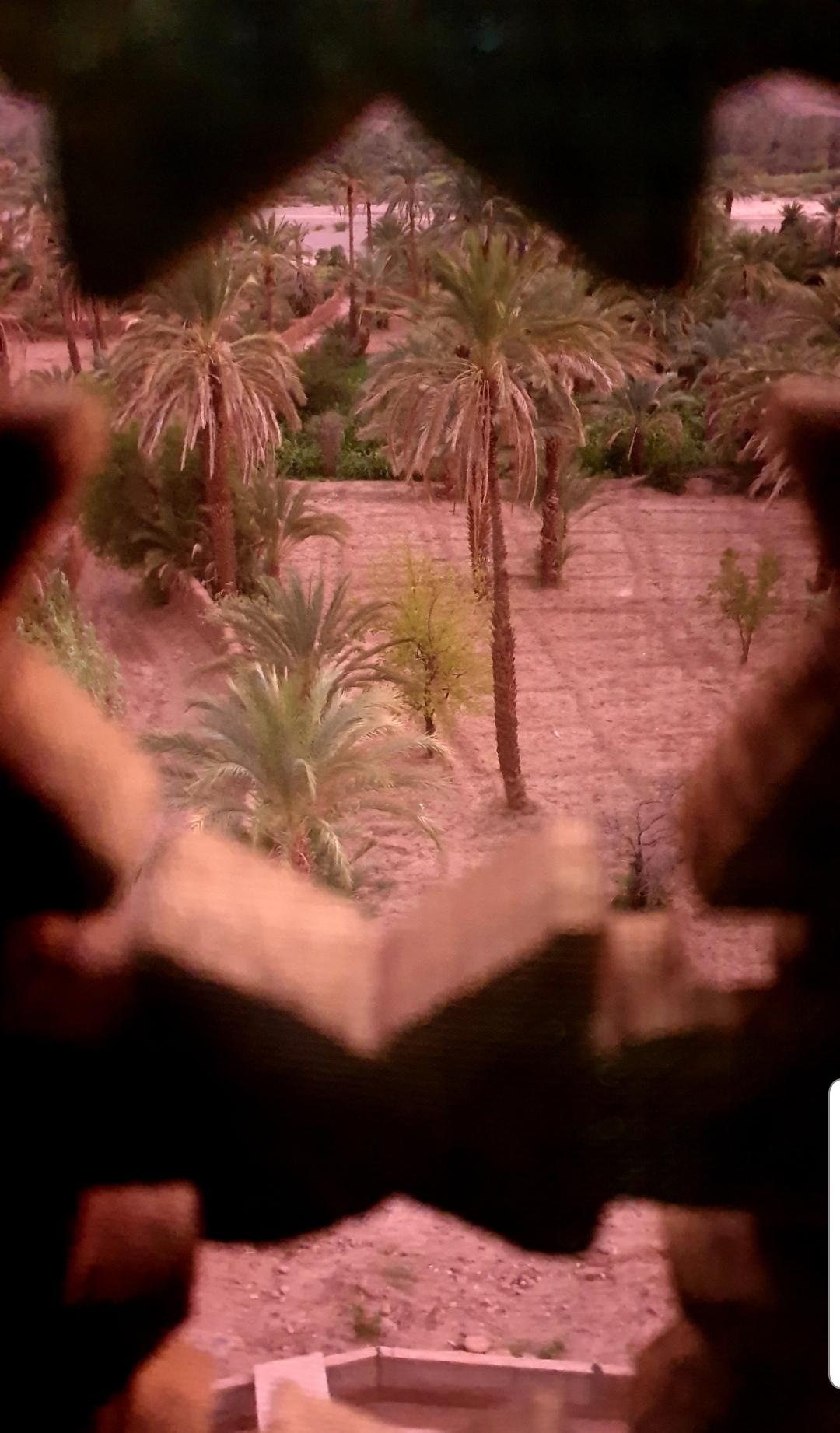 Photo vue de la fenêtre de la chambre d'où on voit la palmeraie